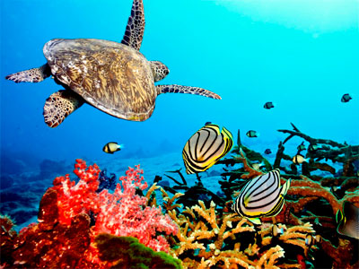 Коралловый сад