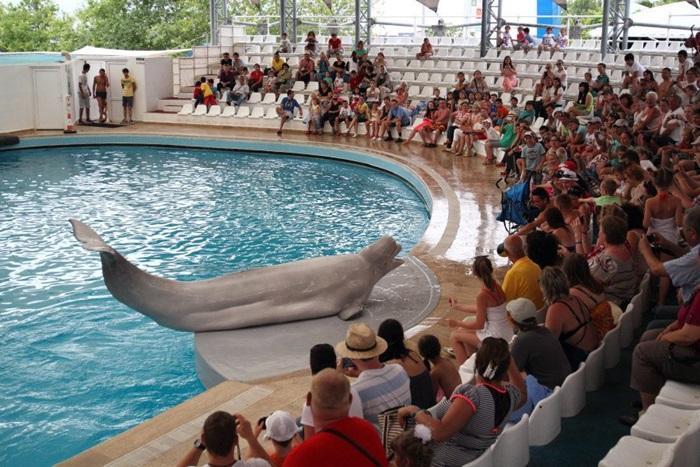 Дельфинарий в Кемере